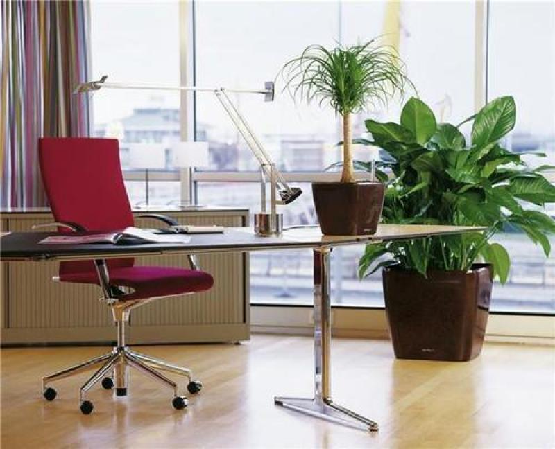 Озеленение офисов