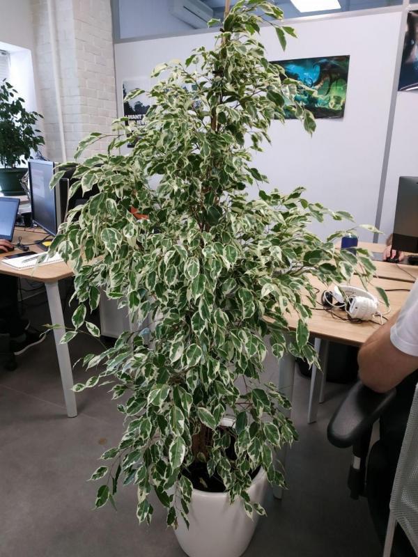 Озеленение офиса и помещений