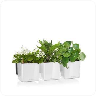 Купить Кашпо LECHUZA Green Wall Home Kit Glossy в СПб с доставкой
