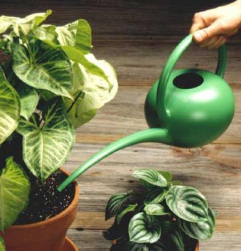 Консультации по уходу за растениями