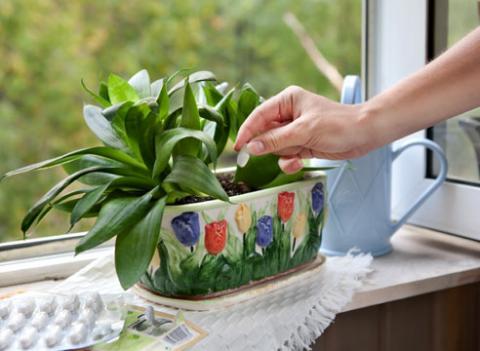 Профессиональная обработка растений